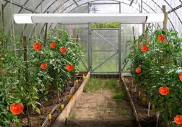 С лучистым теплом выращивать овощи можно даже ранней весной
